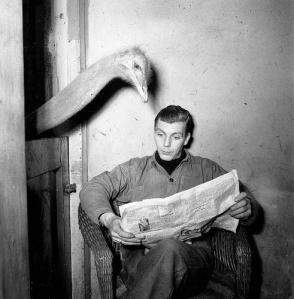 ostrich-newspaper